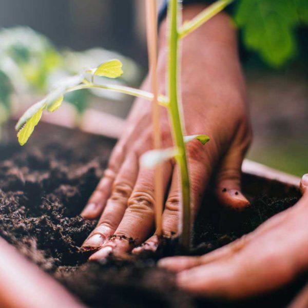 Make Plants Alive